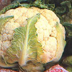 Vegetable Seeds - Cauliflower All The Year Round