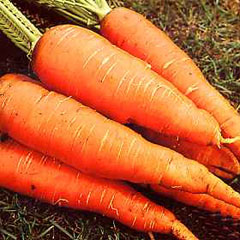 Vegetable Seeds - Carrot Autumn King Improved