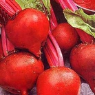 Vegetable Seeds - Beetroot Boltardy