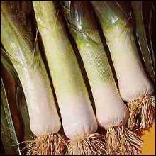 Vegetable Seeds - Leek Musselburgh Improved