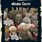 World Garden Seeds- Cactus Special Mixed