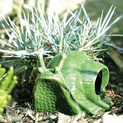 Slug Trap Snail