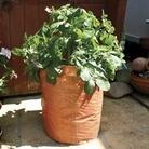 3 Patio Planters