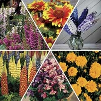 Perennial Mixed Collection 12 Jumbo Ready Plants