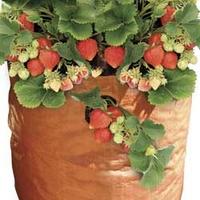 2 Strawberry Planters