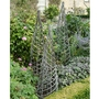 Willow Maypole Plant Support - Set Of 3
