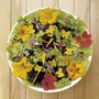 Floral Feast Seeds