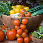 Salad Bag Collection (vegetable plug plant collection)
