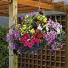 Hanging Basket Seed Collection
