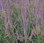 culver&#x27;s root