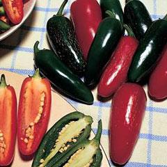 Chilli Seeds Jalapeno Summer Heat F1 Hybrid