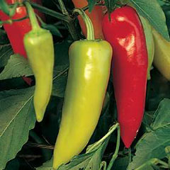 Chilli Pepper Seeds Inferno F1