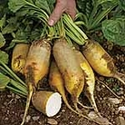 Beetroot Seeds - Yellow Cylindrical