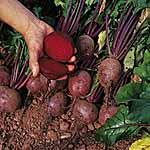 Beetroot Seeds - Globe 2