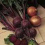 Beetroot Seeds - Moneta