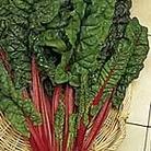 Beet (Leaf) Seeds - Rhubarb Chard