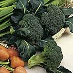 Broccoli Autumn Spear Seeds