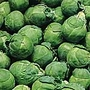 Brussels Sprouts F1 Silverline Seeds