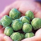 Brussels Sprouts F1 Brilliant Seeds
