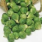 Brussels Sprouts Seeds - Bedford-Fillbasket