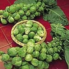 Brussels Sprouts Bedford - Winter Harvest Seeds