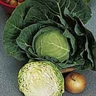 Cabbage Golden Acre Primo (11) Seeds