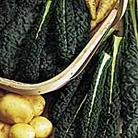 Kale Nero Di Toscana Precoce Seeds