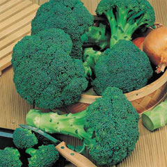 Broccoli Calabrese Tenderstem - 5 Plug Plants