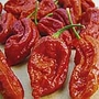 Pepper Chilli Bhut Jolokia Fiery Furnace Seeds