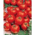 Tomato Gardeners Delight - 5 Plug Plants