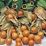 Cape Gooseberry Seeds