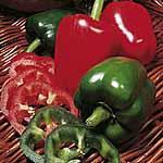 Pepper Californian Wonder Seeds