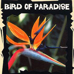 Exotic Seeds - Bird of Paradise