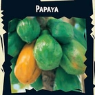 World Garden Seeds- Papaya