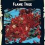 Exotic Seeds - Flame Tree