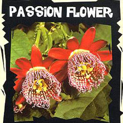 Exotic Seeds - Passion Flower