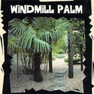 Exotic Seeds - Windmill Palm