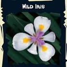 World Garden Seeds-Wild Iris