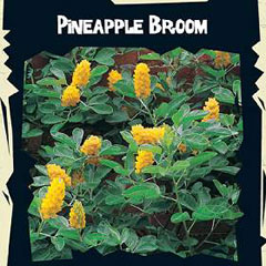 Exotic Seeds - Pineapple Broom