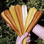 Carrot F1 Rainbow Seeds