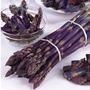 Asparagus Pacific Purple