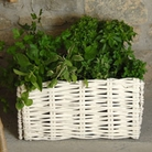 Burgon and Ball Willow Herb Planter With Planting Bag