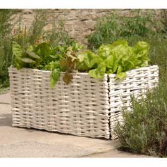 Burgon and Ball Willow Salad Planter With Planting Bag