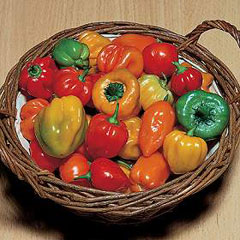 Vegetable Seeds-Chilli Tropical Heat