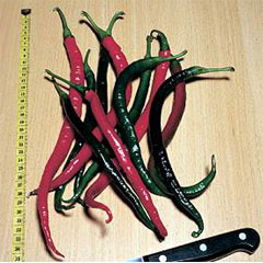 Chilli Seeds Pinocchios Nose