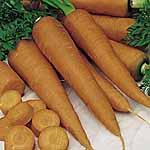 Carrot St. Valery Seeds
