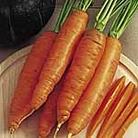 Carrot F1 Bangor Seeds