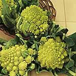 Cauliflower Romanesco Early Seeds
