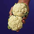 Cauliflower Igloo Seeds