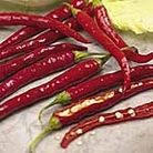 Pepper Chilli - Chilli De Cayenne Seeds